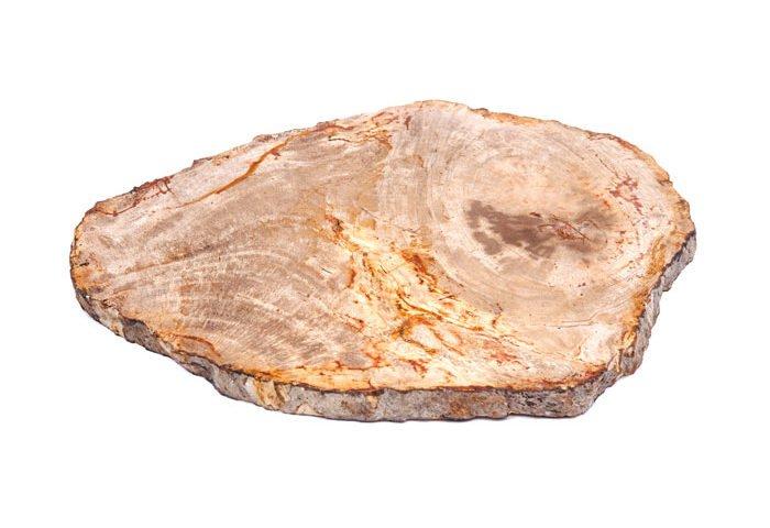 piedra madera petrificada fosilizada