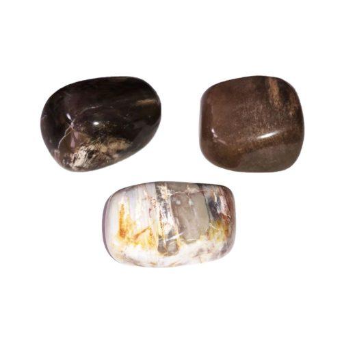 piedra rodada madera petrificada