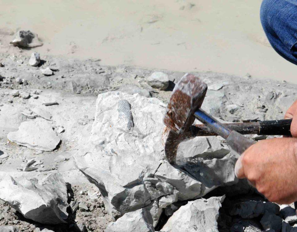 colecta de fósiles