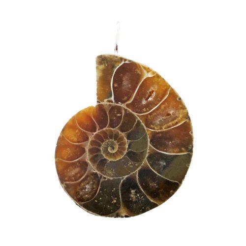 colgante-amonita-piedra-bruta